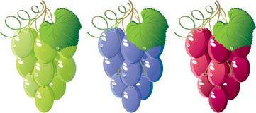 Geplaatste druiven Royalty-vrije Stock Afbeeldingen