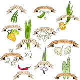 Geplaatste groenten Royalty-vrije Stock Fotografie