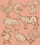 Geplaatste het aromapictogrammen van het voedsel: landbouwbedrijf dieren Stock Fotografie