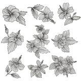 Geplaatste hibiscusbloemen Stock Foto's