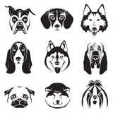 Geplaatste honden Royalty-vrije Stock Foto's