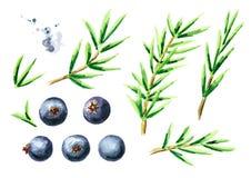 Geplaatste jeneverbessenelementen Waterverfhand getrokken die illustratie, op witte achtergrond wordt geïsoleerd Stock Fotografie