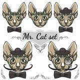 Geplaatste katten Heer royalty-vrije illustratie