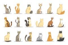 Geplaatste katten verschillende rassen, leuke huisdier vectorillustraties stock illustratie