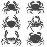 Geplaatste krabben Royalty-vrije Stock Afbeeldingen