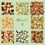 Geplaatste noten en zaden Stock Foto