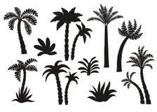Geplaatste palm zwarte silhouetten Stock Foto