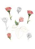 Geplaatste rozen Stock Fotografie