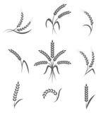 Geplaatste tarweoren of rijstpictogrammen Landbouwsymbolen op witte achtergrond Stock Afbeeldingen