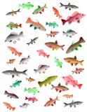 Geplaatste vector: vissen, shells en zeevruchten Stock Afbeelding