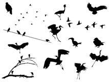 Geplaatste vogels stock illustratie