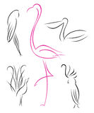 Geplaatste vogels Royalty-vrije Stock Foto's