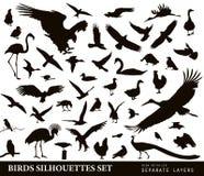 Geplaatste vogels Stock Afbeeldingen
