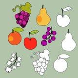 Geplaatste vruchten Stock Afbeeldingen