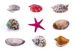 Geplaatste zeeschelp en Zeester - Geïsoleerd op Witte Achtergrond Stock Fotografie