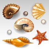 Geplaatste zeeschelpen Stock Fotografie