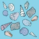 Geplaatste zeeschelpen. Vector royalty-vrije illustratie