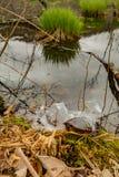Geplakt in een plastic zes pakring stock fotografie