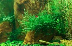 Geplant aquarium stock afbeeldingen