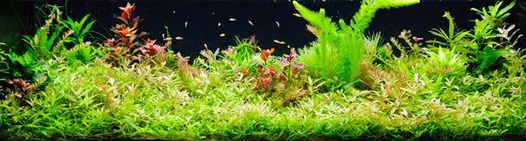 Geplant aquarium royalty-vrije stock afbeeldingen