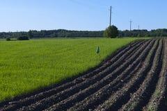 Geploegd aardappelgebied en groen gras Stock Fotografie
