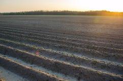 Geploegd gebied na cultuur voor het planten van landbouwgewassen Landschap met Landbouwgrond bedden voor installaties Landbouw, stock afbeelding
