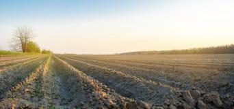 Geploegd gebied na cultuur voor het planten van landbouwgewassen Landschap met Landbouwgrond bedden voor installaties Landbouw, royalty-vrije stock fotografie