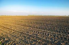 Geploegd gebied na cultuur voor het planten van landbouwgewassen Landschap met Landbouwgrond bedden voor installaties Landbouw, stock foto's