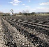Geploegd gebied voor aardappel in bruine grond op open plattelandsaard stock fotografie