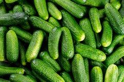 Geplukte komkommers Stock Afbeelding