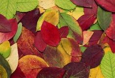 Gepresste Blätter Lizenzfreies Stockfoto