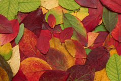 Gepresste Blätter Stockfoto