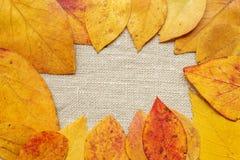 Gepresste Blätter Stockbild