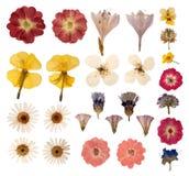 Gepresste Blumen Stockbild