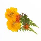 Gepresste Blumen II Stockfotos