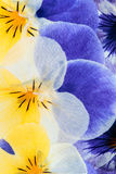 Gepresste Blumen-Zusammenfassung Lizenzfreies Stockbild