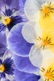 Gepresste Blumen-Zusammenfassung Stockfotografie