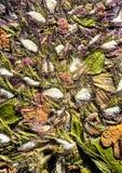 Gepresste Blumenzusammenfassung Lizenzfreies Stockbild