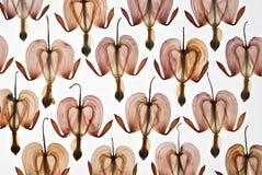 Gepresste Herzblumen Lizenzfreie Stockfotografie