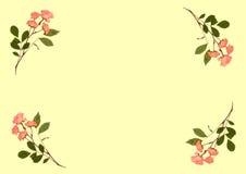 Gepresste rosafarbene Rosen Stockbilder