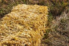 Gepresste Strohbriketts nach links der Ernte, die auf einem Feld bei Sonnenuntergang liegt, drückten Heubriketts auf dem Feld Lizenzfreies Stockbild