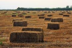 Gepresste Strohbriketts nach links der Ernte, die auf einem Feld an der Sonnenunterganglandschaft liegt Lizenzfreie Stockbilder