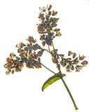 Gepresste Wildflowers auf Stamm Lizenzfreie Stockfotografie