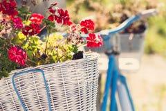 Gerânio em uma cesta da bicicleta retro fotografia de stock royalty free