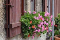 Gerânio - flores bonitas do balcão imagens de stock
