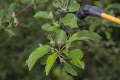 Gerät für das Sprühen des Schädlingsbekämpfungsmittels im Garten Lizenzfreie Stockfotografie