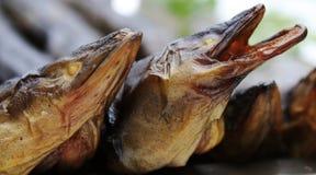 Geräucherte Aale Stockbilder