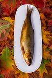 Geräucherte Fische auf einer weißen Platte Stockbild