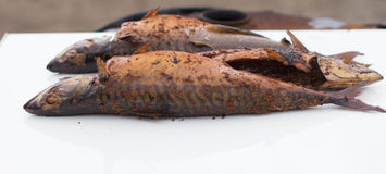 Geräucherte Makrele Stockfoto
