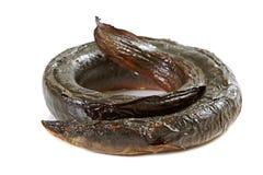 Geräucherter Aal Lizenzfreie Stockbilder